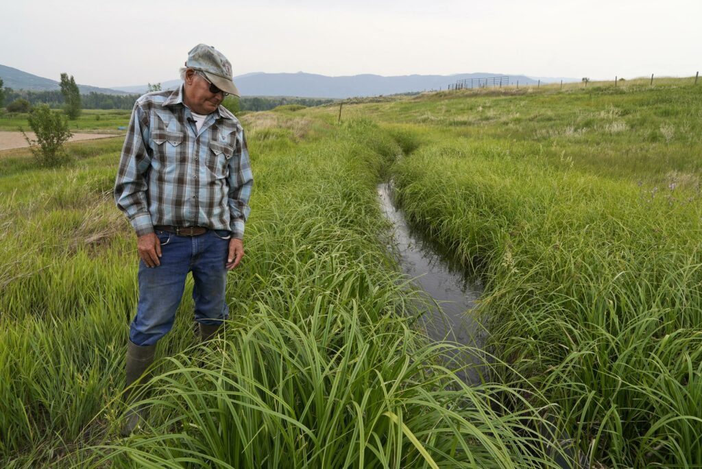 As drought cuts hay crop, cattle ranchers face culling herds