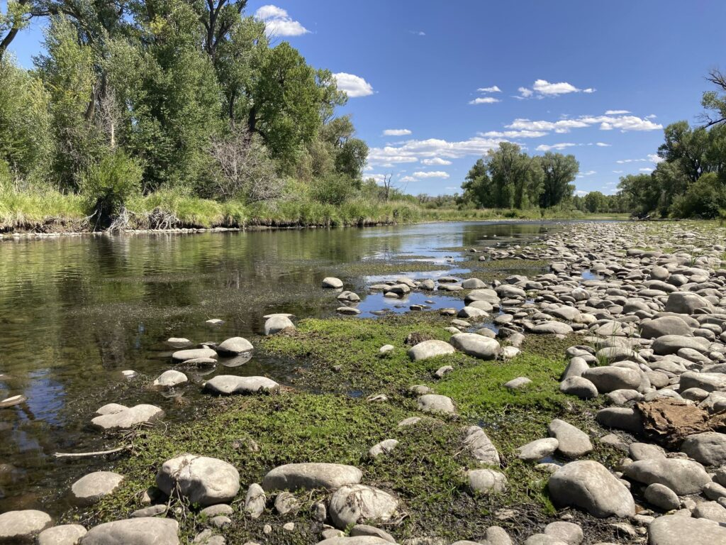 Treasured US West trout streams wither amid heat, drought